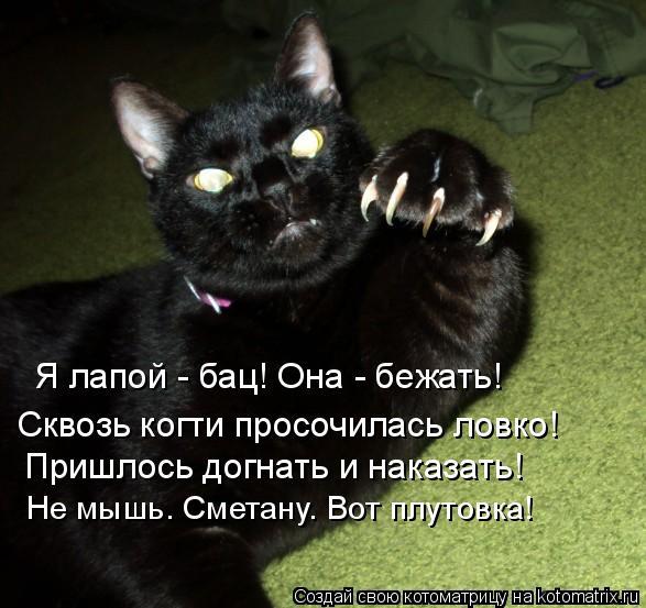 Котоматрица: Я лапой - бац! Она - бежать!  Сквозь когти просочилась ловко!  Пришлось догнать и наказать! Не мышь. Сметану. Вот плутовка!