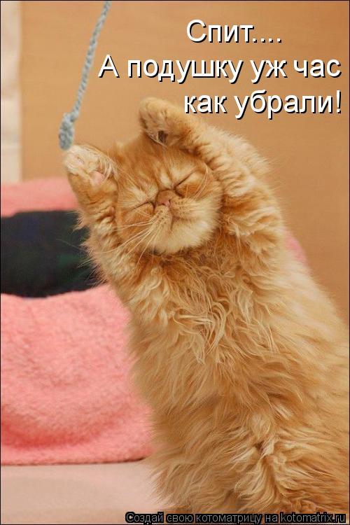 Котоматрица: Спит.... А подушку уж час как убрали!