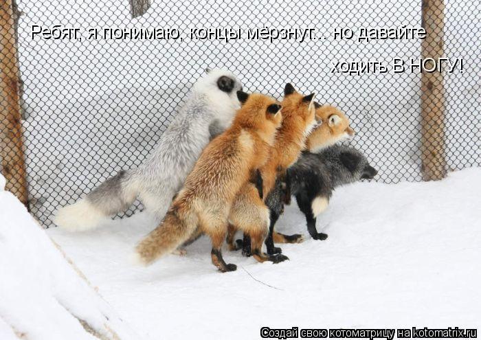 Котоматрица: Ребят, я понимаю, концы мёрзнут... но давайте ходить В НОГУ!