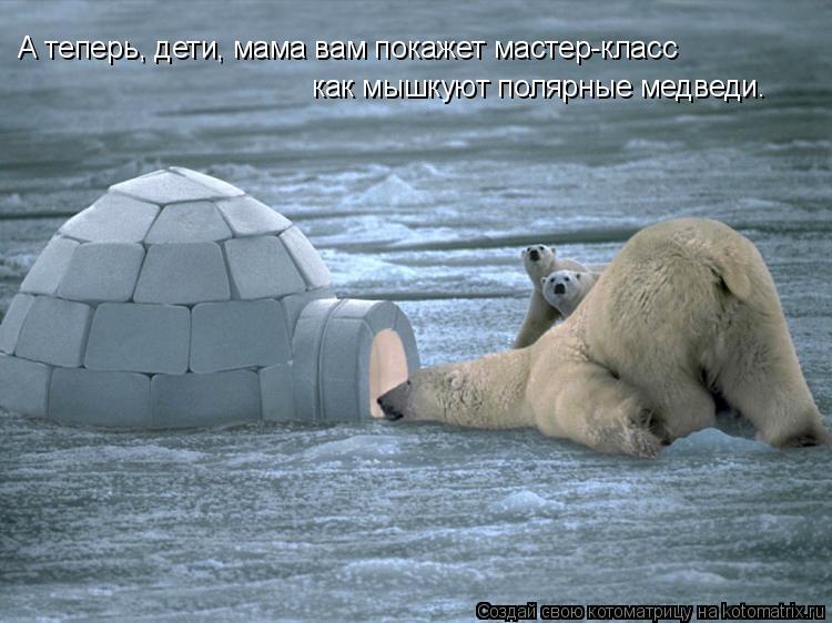 Котоматрица: А теперь, дети, мама вам покажет мастер-класс  как мышкуют полярные медведи.