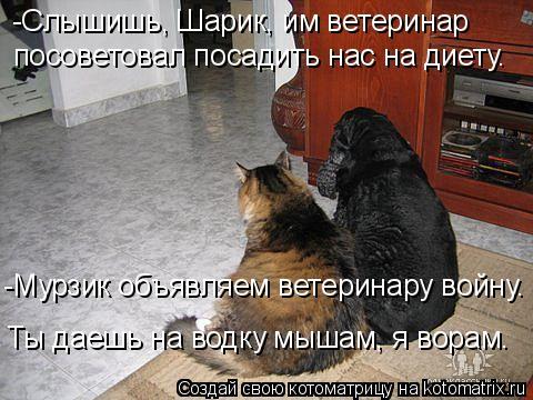 Котоматрица: -Слышишь, Шарик, им ветеринар посоветовал посадить нас на диету. Ты даешь на водку мышам, я ворам. -Мурзик объявляем ветеринару войну.