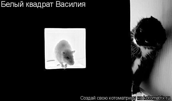 Котоматрица: Белый квадрат Василия