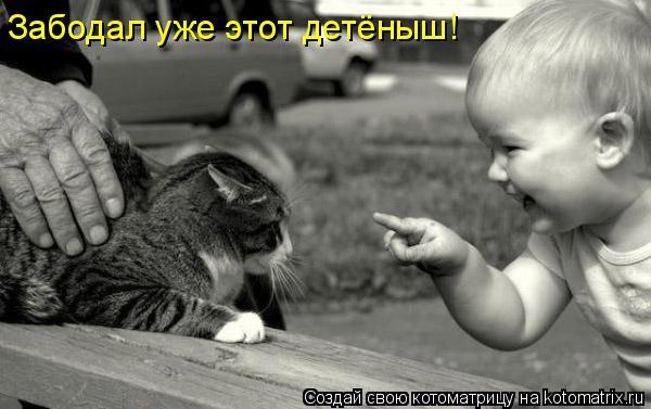 Котоматрица: Забодал уже этот детёныш!