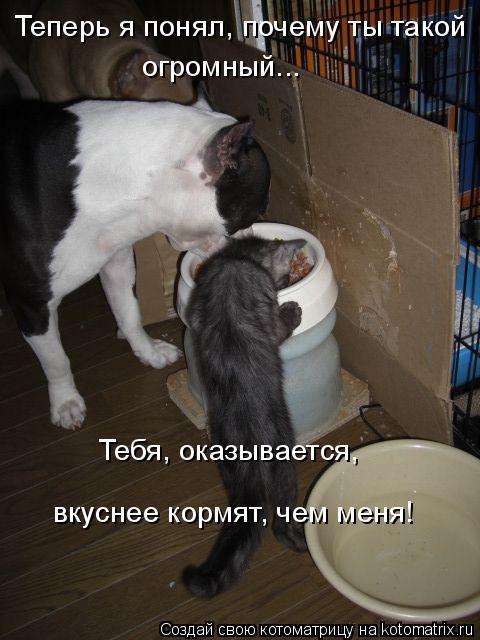 Котоматрица: Теперь я понял, почему ты такой  огромный... вкуснее кормят, чем меня! Тебя, оказывается,