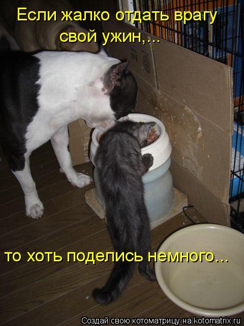 Котоматрица: Если жалко отдать врагу  свой ужин,... то хоть поделись немного...
