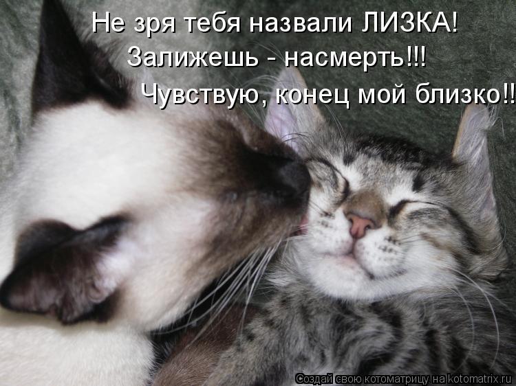 Почему коты лучше людей:-)