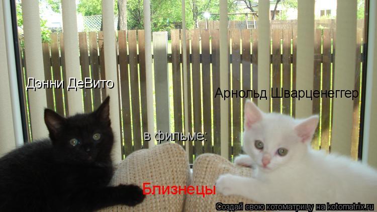Котоматрица: Дэнни ДеВито Арнольд Шварценеггер Близнецы в фильме: