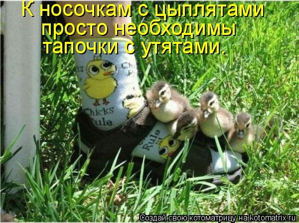Котоматрица: К носочкам с цыплятами  просто необходимы  тапочки с утятами.