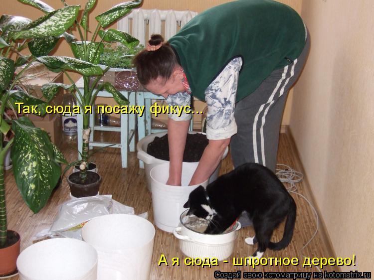 Котоматрица - Так, сюда я посажу фикус... А я сюда - шпротное дерево!