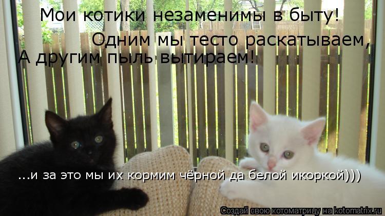 Котоматрица: Мои котики незаменимы в быту! Одним мы тесто раскатываем, А другим пыль вытираем! ...и за это мы их кормим чёрной да белой икоркой)))