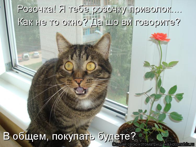 Котоматрица: Розочка! Я тебе розочку приволок.... Как не то окно? Да шо ви говорите?  В общем, покупать будете?