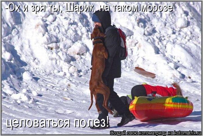 Котоматрица: -Ох и зря ты, Шарик, на таком морозе  целоваться полез!
