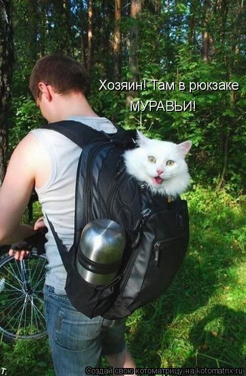 Котоматрица: Хозяин! Там в рюкзаке МУРАВЬИ!
