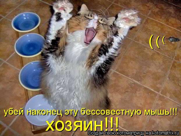 Котоматрица: хозяин!!! убей наконец эту бессовестную мышь!!! ( ( (
