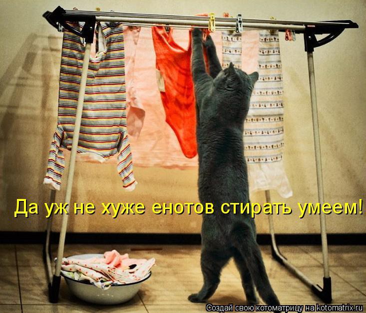 Котоматрица: Да уж не хуже енотов стирать умеем!