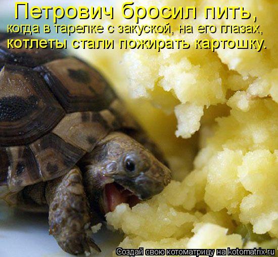 Котоматрица: Петрович бросил пить,   когда в тарелке с закуской, на его глазах,  котлеты стали пожирать картошку.