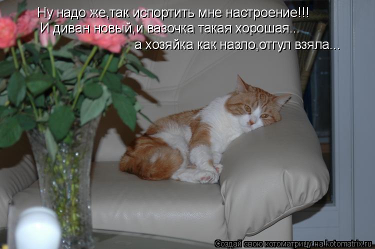 Котоматрица: Ну надо же,так испортить мне настроение!!! И диван новый,и вазочка такая хорошая... а хозяйка как назло,отгул взяла...