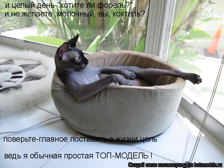 http://kotomatrix.ru/images/lolz/2010/05/23/581393.jpg