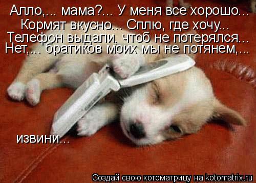 Котоматрица: Алло,... мама?... У меня все хорошо... Кормят вкусно... Сплю, где хочу... Телефон выдали, чтоб не потерялся... Нет,... братиков моих мы не потянем,...