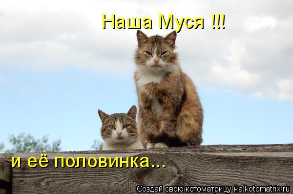 Котоматрица: Наша Муся !!! и её половинка...