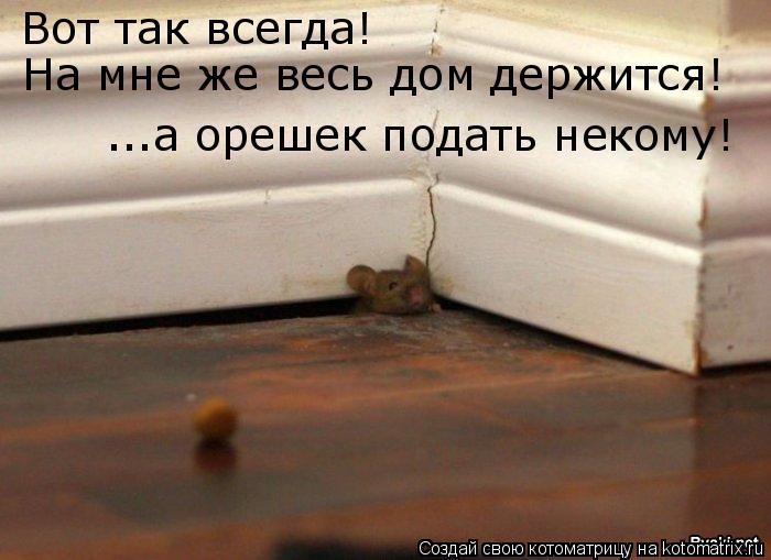 Котоматрица: Вот так всегда! На мне же весь дом держится! ...а орешек подать некому!