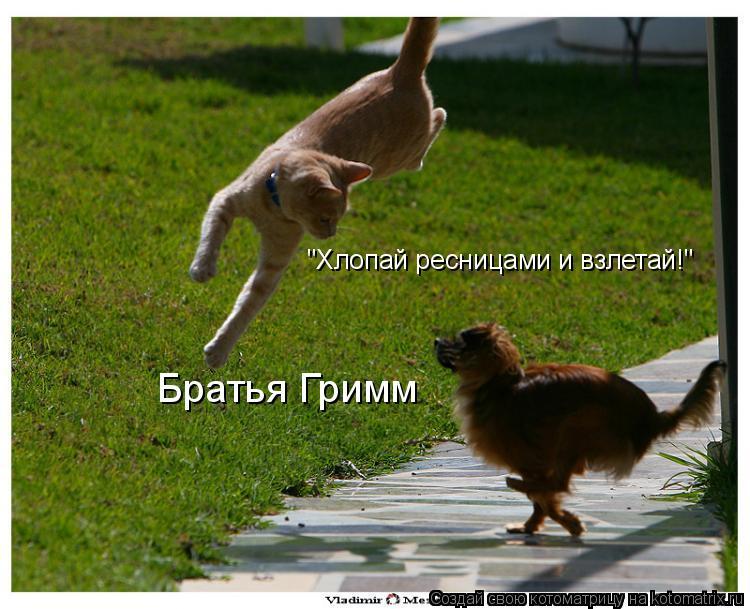 """Котоматрица: """"Хлопай ресницами и взлетай!"""" Братья Гримм"""
