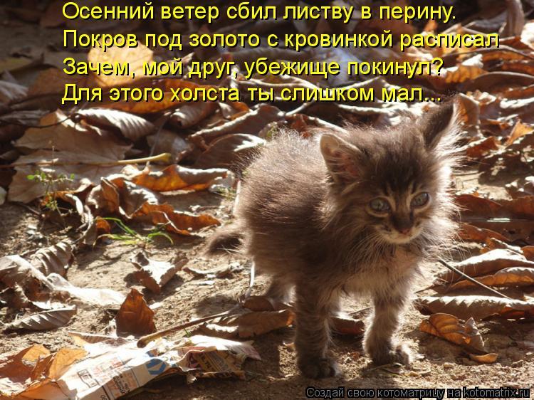 Котоматрица: Осенний ветер сбил листву в перину. Покров под золото с кровинкой расписал Для этого холста ты слишком мал... Зачем, мой друг, убежище покину