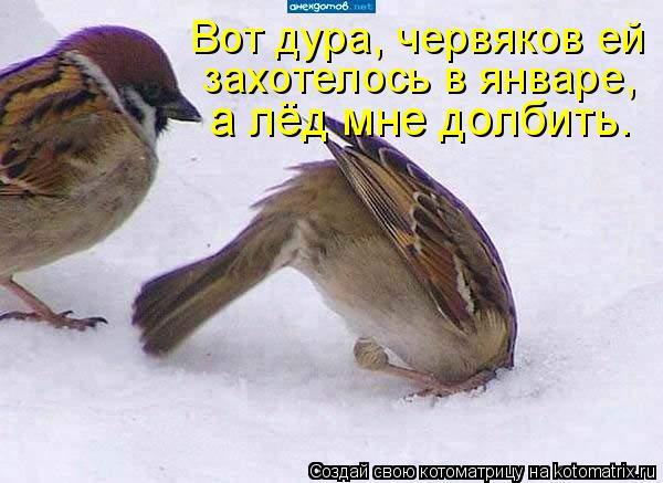 Котоматрица: Вот дура, червяков ей  захотелось в январе,  а лёд мне долбить.