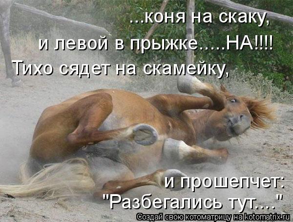 "Котоматрица: ...коня на скаку,  и левой в прыжке.....НА!!!! Тихо сядет на скамейку,  и прошепчет: ""Разбегались тут...."""