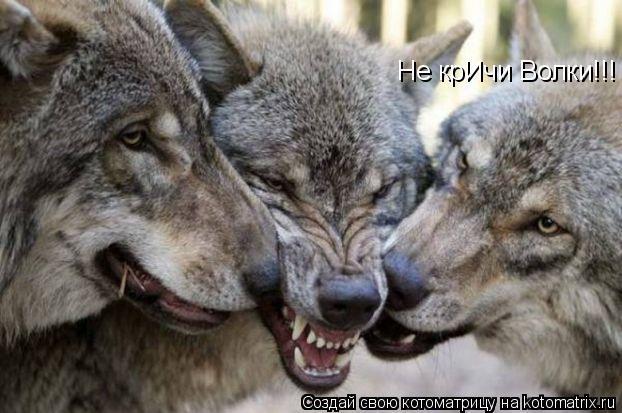 Котоматрица: Не крИчи Волки!!!
