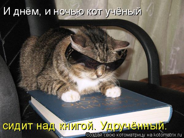 Котоматрица: И днём, и ночью кот учёный сидит над книгой. Удручённый.