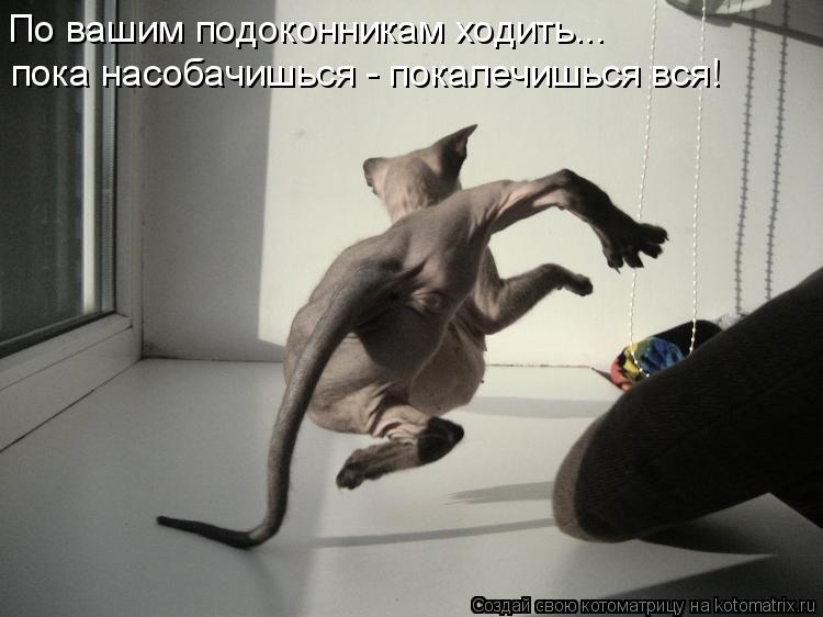 Котоматрица - По вашим подоконникам ходить...  пока насобачишься - покалечишься вся!