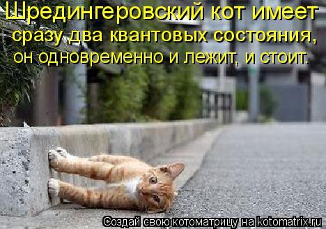 Котоматрица: Шредингеровский кот имеет  сразу два квантовых состояния,  он одновременно и лежит, и стоит.