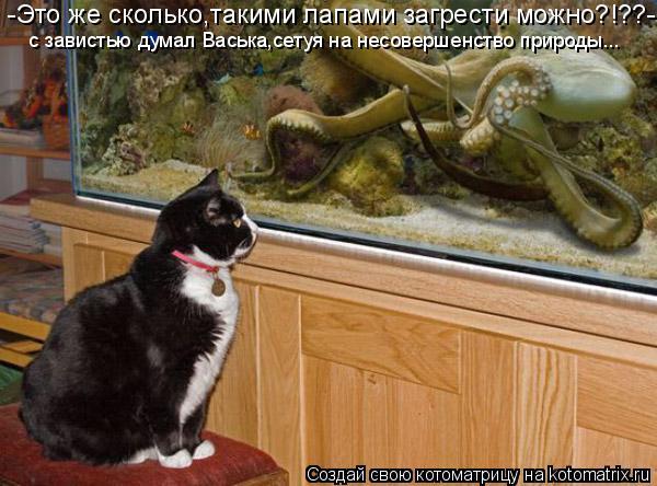 Котоматрица: -Это же сколько,такими лапами загрести можно?!??- с завистью думал Васька,сетуя на несовершенство природы...