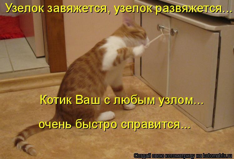 Котоматрица: Узелок завяжется, узелок развяжется...  Котик Ваш с любым узлом... очень быстро справится...