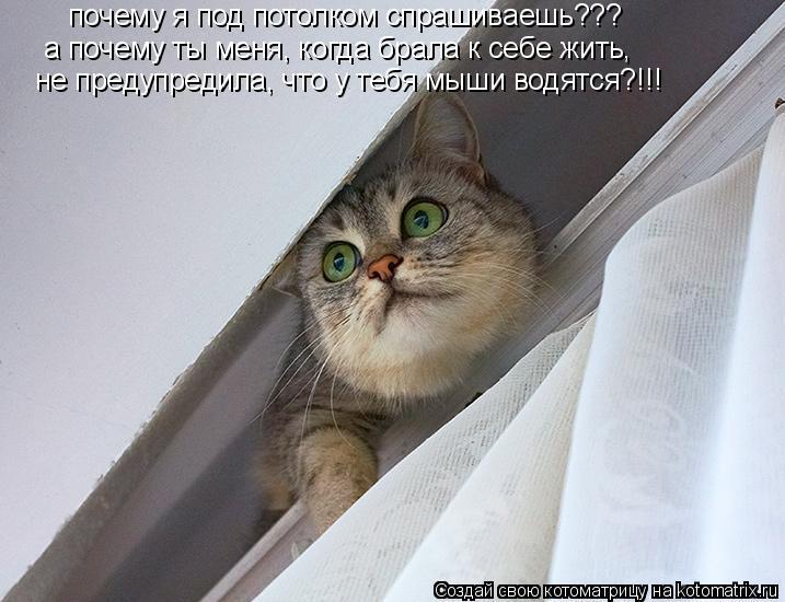 Котоматрица: почему я под потолком спрашиваешь??? а почему ты меня, когда брала к себе жить,  не предупредила, что у тебя мыши водятся?!!!