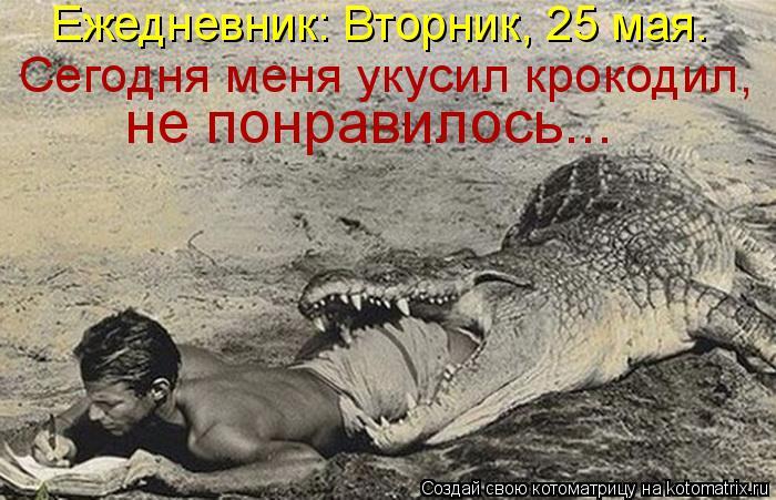 Котоматрица: Ежедневник: Вторник, 25 мая.  Сегодня меня укусил крокодил,  не понравилось...