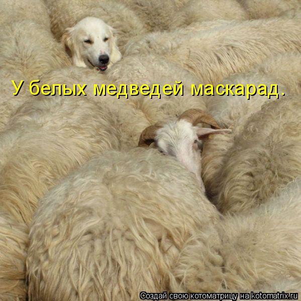 Котоматрица: У белых медведей маскарад.