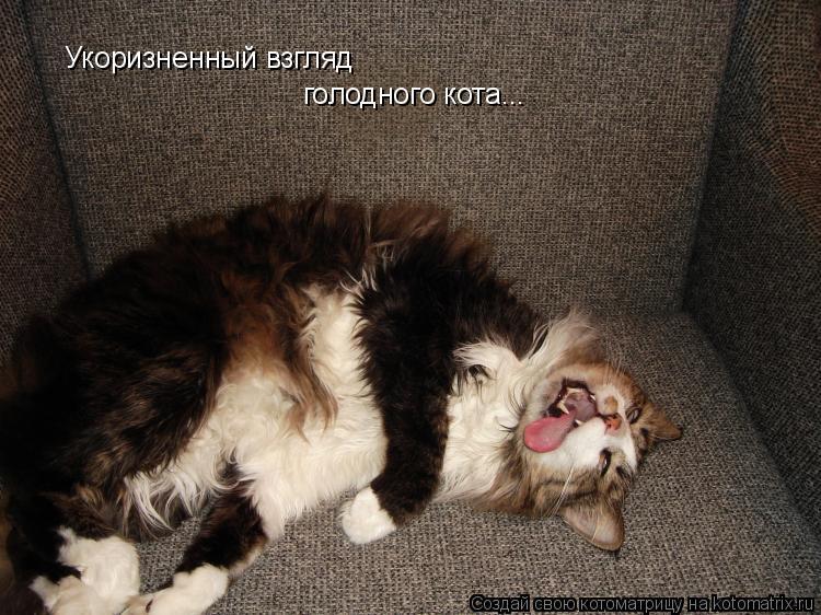 Котоматрица: Укоризненный взгляд  голодного кота...