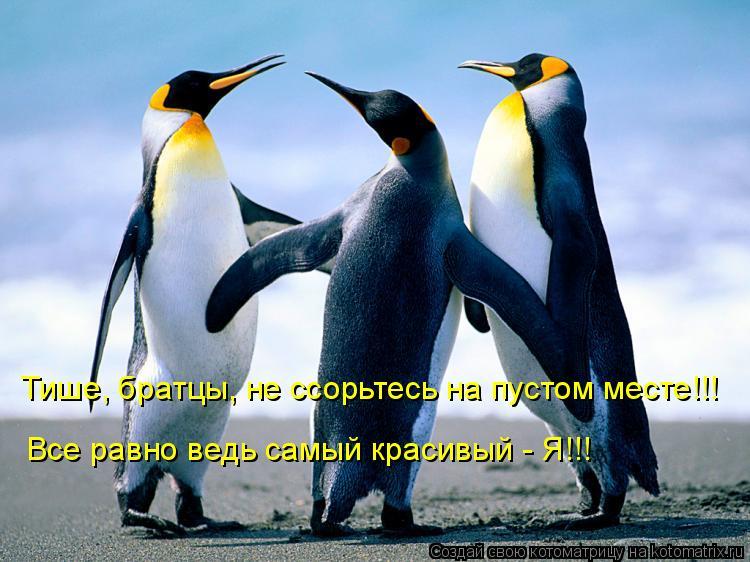 Котоматрица: Тише, братцы, не ссорьтесь на пустом месте!!! Все равно ведь самый красивый - Я!!!