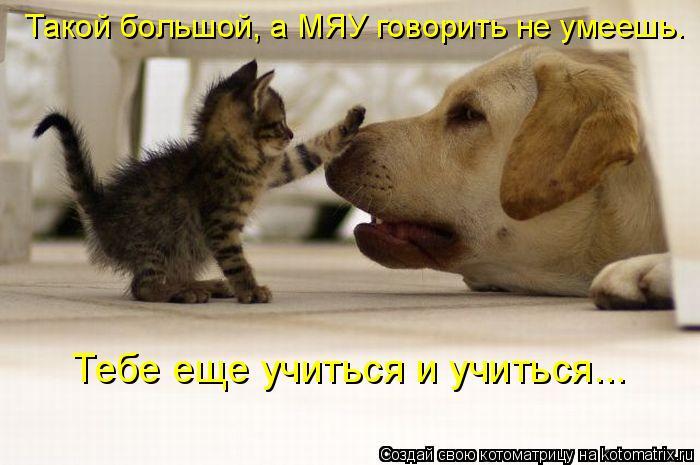Котоматрица: Такой большой, а МЯУ говорить не умеешь. Тебе еще учиться и учиться...