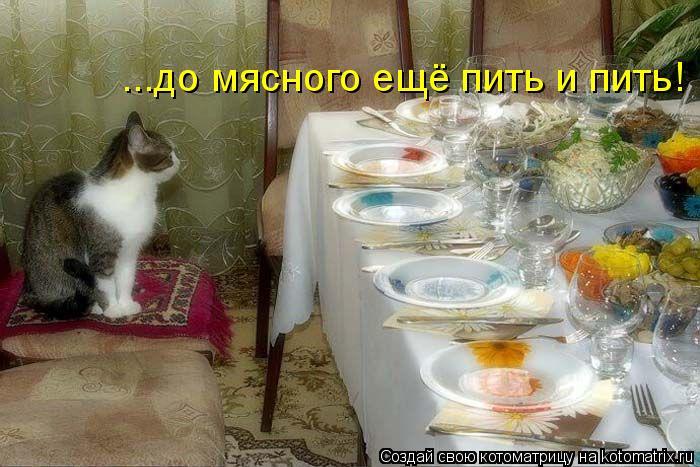 Котоматрица: ...до мясного ещё пить и пить!
