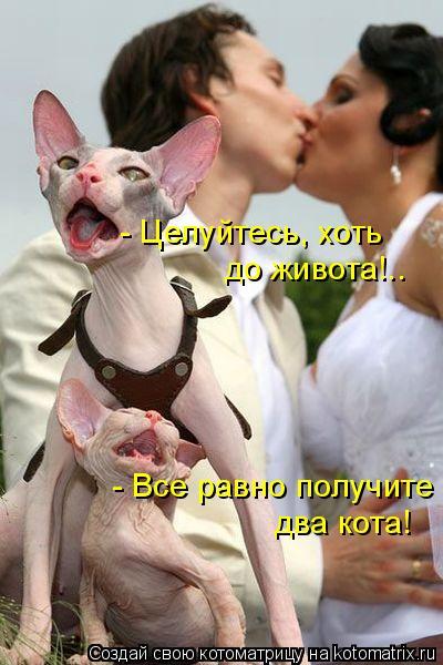 Котоматрица: - Целуйтесь, хоть  до живота!.. - Все равно получите два кота!