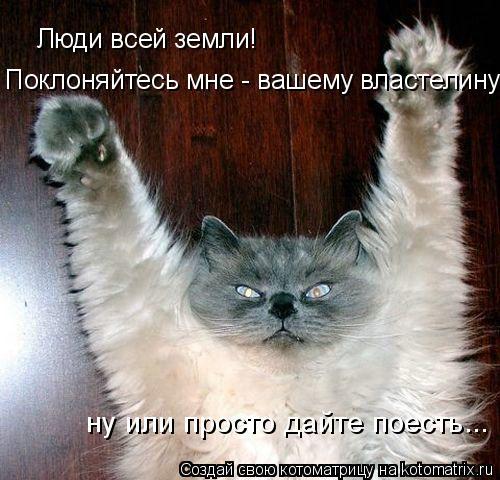 Котоматрица: Люди всей земли! Поклоняйтесь мне - вашему властелину! ну или просто дайте поесть...