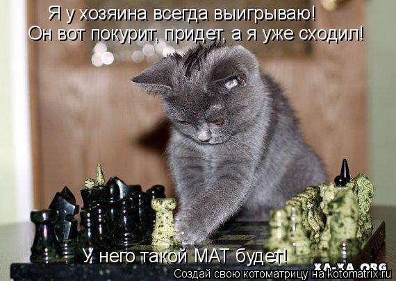 Котоматрица: Я у хозяина всегда выигрываю! У него такой МАТ будет! Он вот покурит, придет, а я уже сходил!