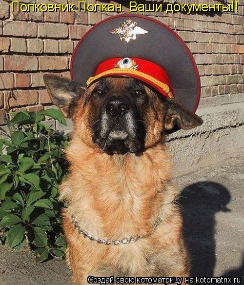 Котоматрица: Полковник Полкан. Ваши документы!!