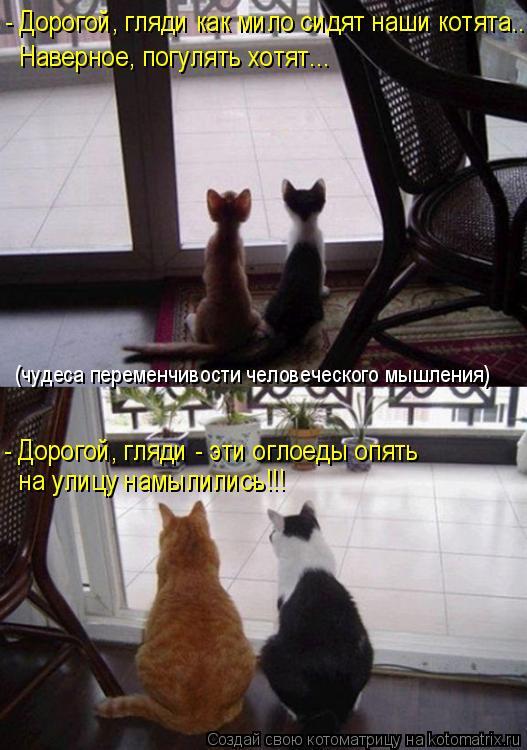 Котоматрица: - Дорогой, гляди как мило сидят наши котята.. Наверное, погулять хотят... - Дорогой, гляди - эти оглоеды опять  на улицу намылились!!! (чудеса пер
