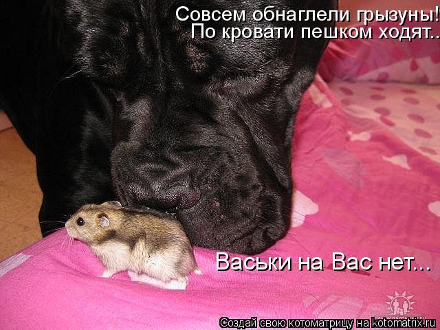 Котоматрица: Совсем обнаглели грызуны!  Васьки на Вас нет...  По кровати пешком ходят...