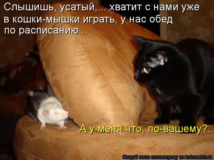 Котоматрица: Слышишь, усатый,... хватит с нами уже  в кошки-мышки играть, у нас обед  по расписанию... А у меня что, по-вашему?...
