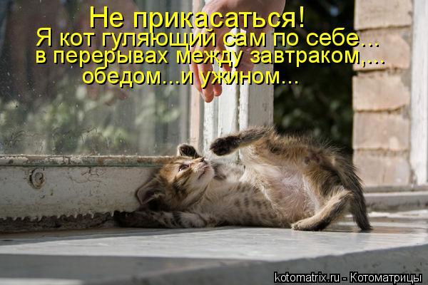 Котоматрица: Не прикасаться!  Я кот гуляющий сам по себе...  в перерывах между завтраком,... обедом...и ужином...